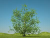 3d alder tree