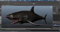 Shark Rigged