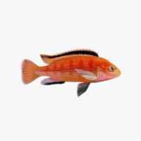 Fish Labidochromis Colybry Riged v2