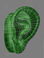 3ds human ear