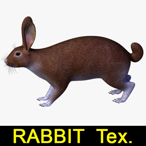 Rabbit_leo3dmodels_00.jpg