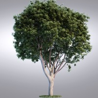 HI Realistic Series Tree - 011