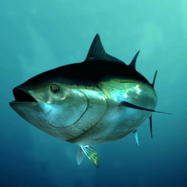 3d Tuna Fish: Giant Bluefin Tuna 3d Obj
