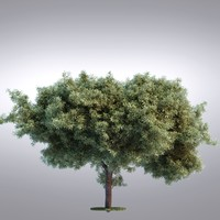HI Realistic Series Tree - 096