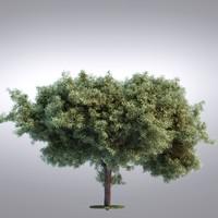 hi realistic series tree obj
