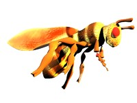 3d wasp model