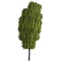 pc tree 3d 3ds