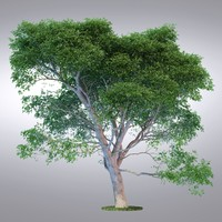HI Realistic Series Tree - 002