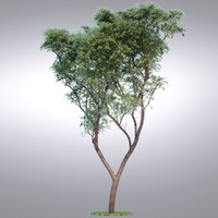 HI Realistic Series Tree - 013