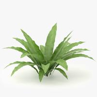 3d model asplenium scolopendrium