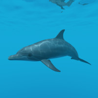 3d model bottlenose dolphin