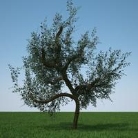 olive tree 3d obj