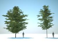 3d trees arch gpu model