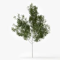 3d max betula tree landscape