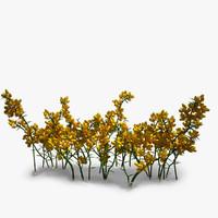 3d gorse flower