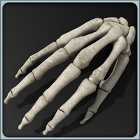 maya anatomical hand skeleton