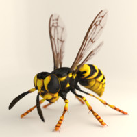Wasp or Hornet