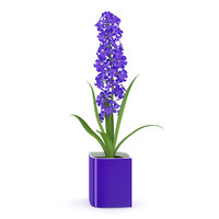flower purple pot