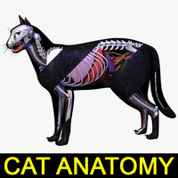 3d model cat anatomy