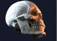 jaw skull 3d model