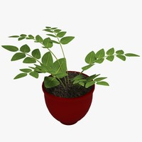 3d potted fern plant