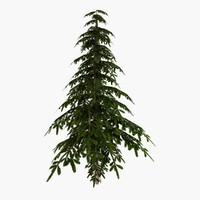 pine tree 3d max