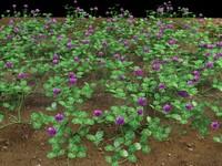 trifolium clover 3d model
