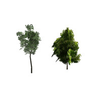 trees video ma