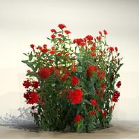 Flower_082