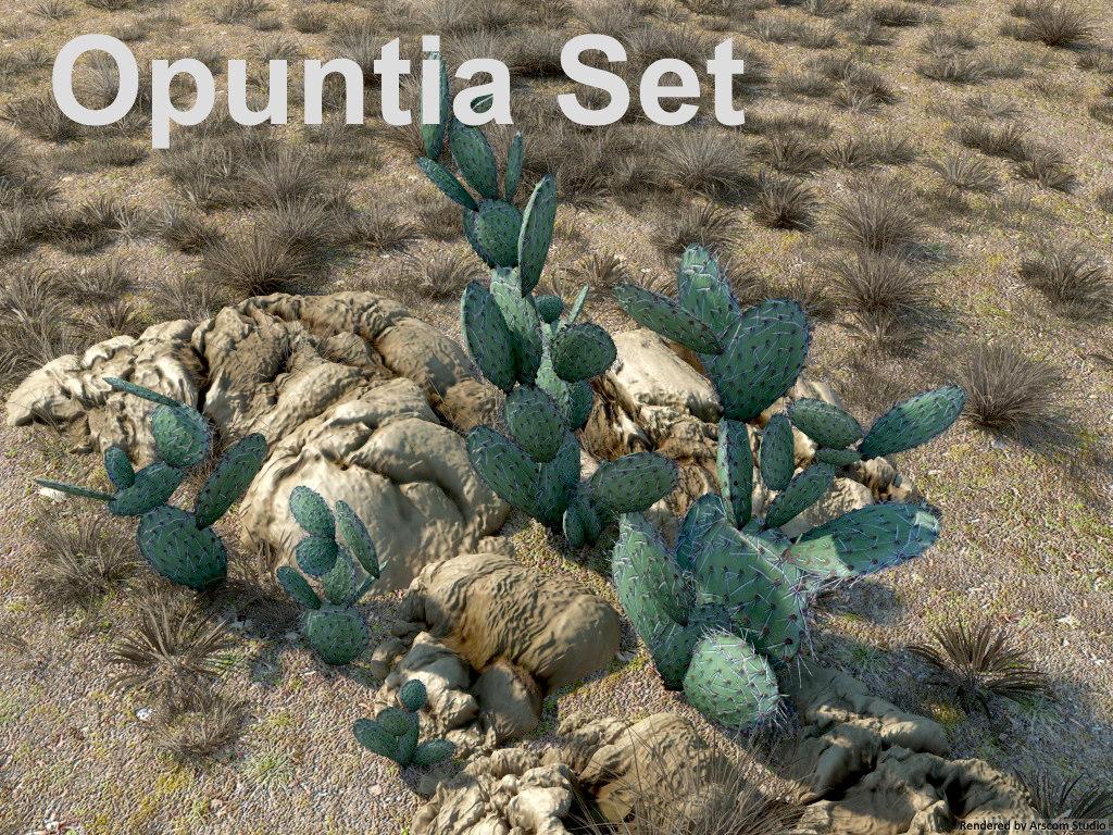 Opuntia1.jpg