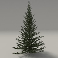3d model firtree blender