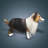 shave collie dog 3d ma