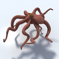 3d model octopus giant pacific