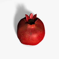 3d pomegranate fruit model