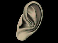 3d model ear