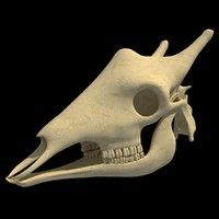 giraffe skull skeleton 3d 3ds