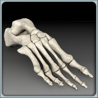 foot skeleton 3d 3ds