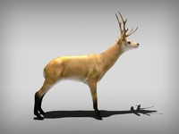 3d model animate