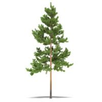 pine fbx