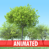 tree animation studio max