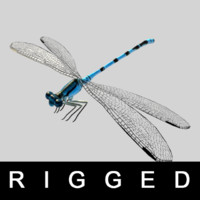 rigged wings legs 3d obj