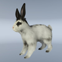 cinema4d hair rabbit