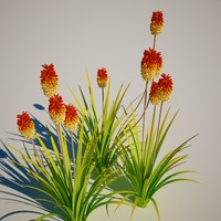 3ds max kniphofia royal standard