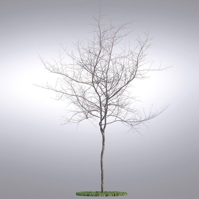 tree118_0001.jpg