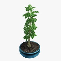 potted bonsai tree 3d model