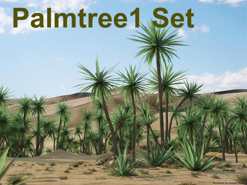 Palmtree 1_1.jpg