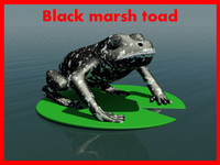 3ds max black marsh toad