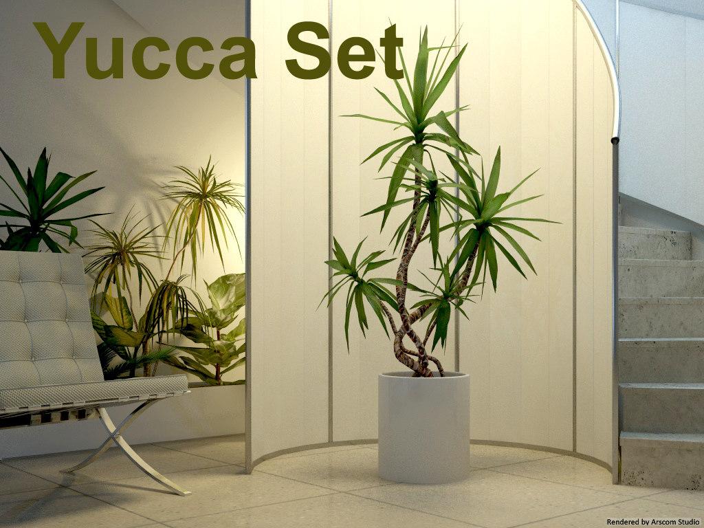 Yucca1.jpg
