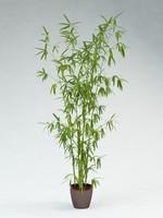maya bamboo tree