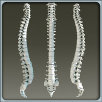 3d 3ds vertebral column skeleton